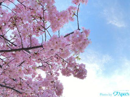 🌸 春 で す ね 🌸